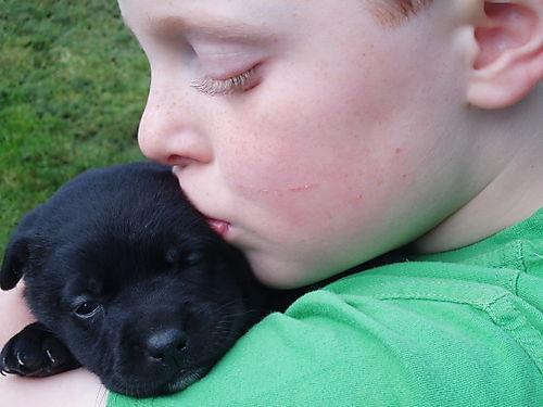 Puppies 2 015