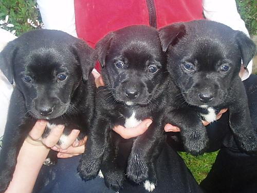 Puppies 2 012